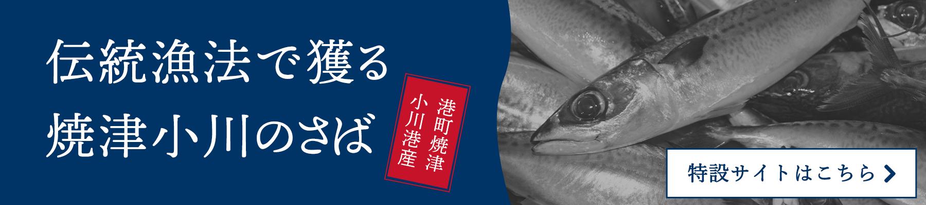 伝統漁法で獲る焼津小川のさば